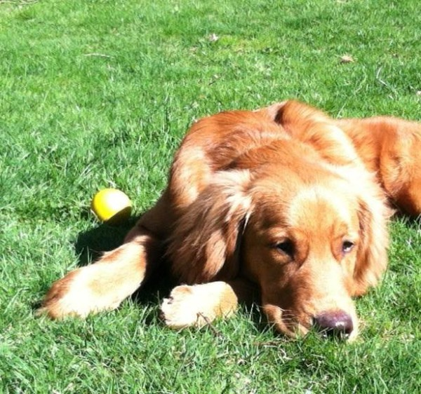 Pet-safe lawn & garden care